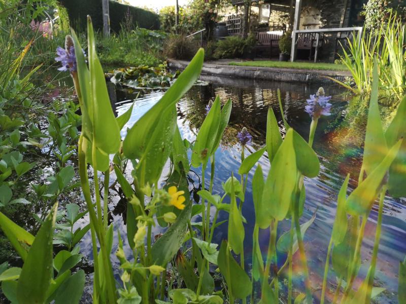 The pond at The Old Vicarage Llandysul